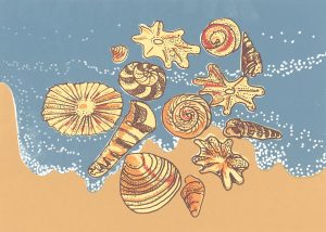 6288_Marisa Ross_beach shells_FF_Web