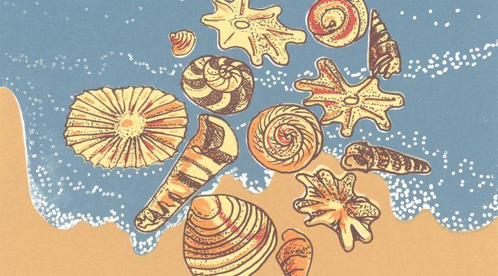 My Shells